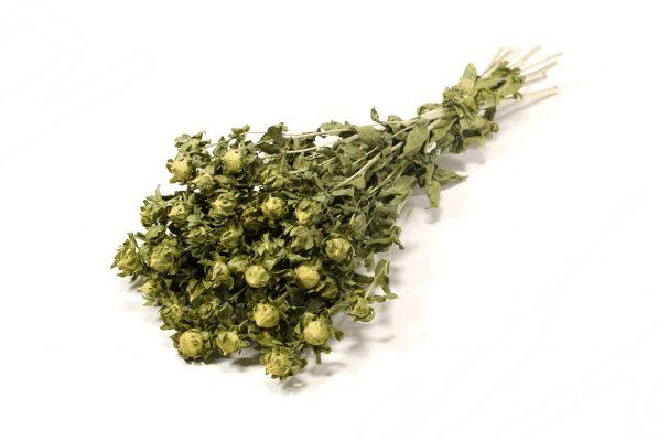 Droogbloem Bidens Groen