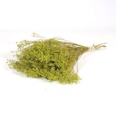 Droogbloem Bloom Groen