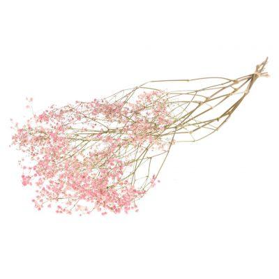 Droogbloem Gipskruid Pink