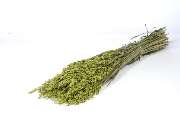 Droogbloem Haver Groen