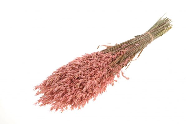 Droogbloem Haver Pink