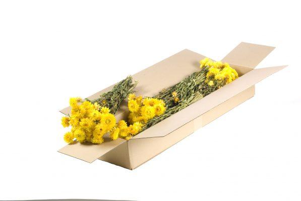 Droogbloem Helichhrysum Geel