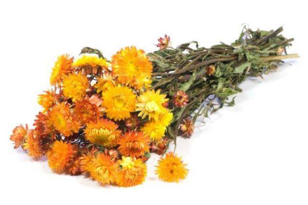 Droogbloem Helichrysum Oranje