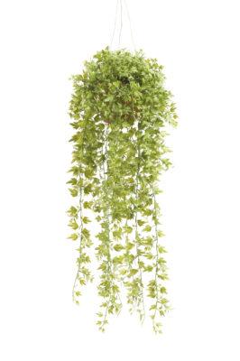 Ivy Hangplant