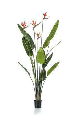 Strelitzia Kunstplant Met Bloemen 150 Cm