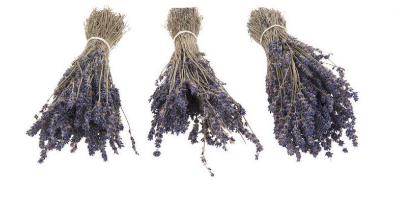 Lavendel Droogbloem