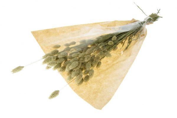 Kanariegras Droogbloem (2 Boeketten)