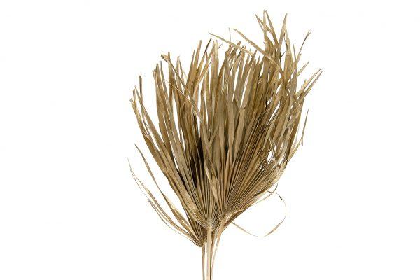 Gedroogde Palmbladeren Goud