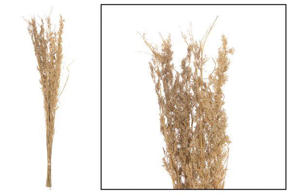 Droogbloem Grassen Natural 2 Bundels