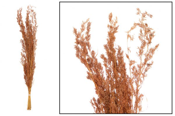 Droogbloem Grassen Terra Cotta 2 Bundels