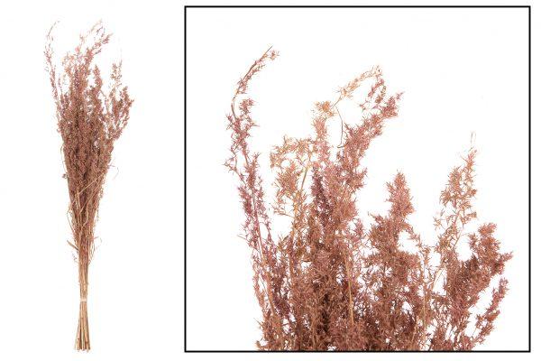 Droogbloem Grassen Light Pink 2 Bundels
