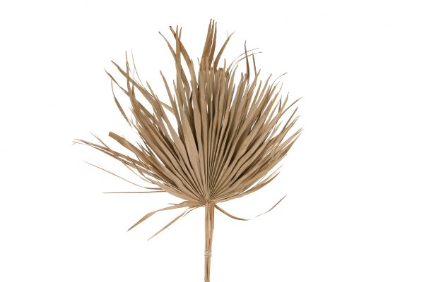 Gedroogde Palmbladeren 10 Stuks
