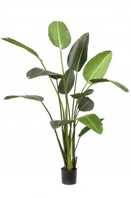 Kunstplant Strelitzia M