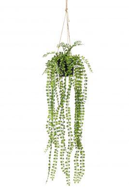 Hangplant Ficus Pumila 2 Stuks