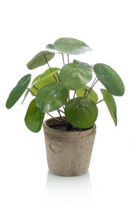Kunstpannenkoek Plant 2 Stuks