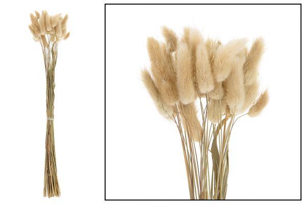 Droogbloem Lagurus Natural 2 Bundels