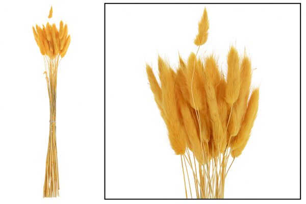 Droogbloem Lagurus Geel 2 Bundels