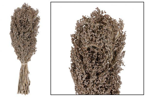 Droogbloem Aloha Grass