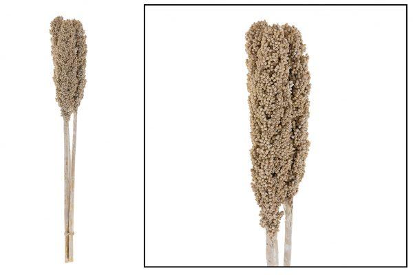Droogbloem Mais Pluim White Wash 6 Stuks