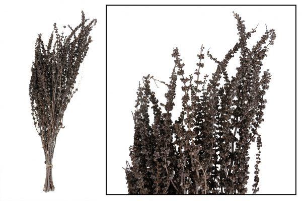 Droogbloem Palma Grass 2 Bundels