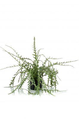 Kunsthangplant Epiphyllum 50 Cm