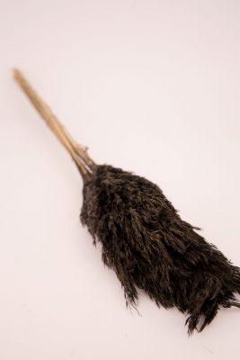 Droogbloem Wilde Pluimen Zwart 30 Stuks