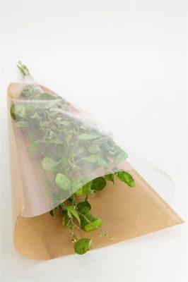 Droogbloem Lunaria Per 2 Bundels