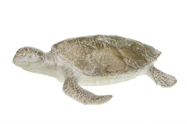 Goudkleurige Schildpad